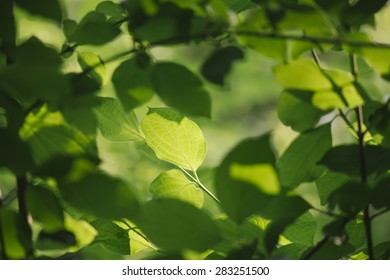 Green leaf with shallow depth of field