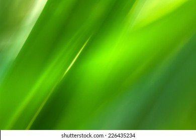 The green leaf is show in texture and pattern of line