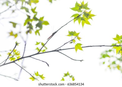 green leaf and sky in blur background