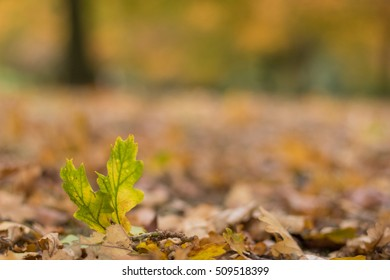 green leaf standing amongst orange Fall leaves background, shallow depth of focus