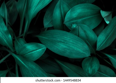 Green leaf surface, abstract background, natural pattern, tropical leaves, dark leaves