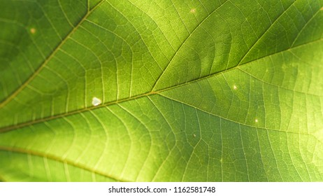 Green leaf surface texture background