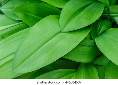 green leaf texture abstract background.