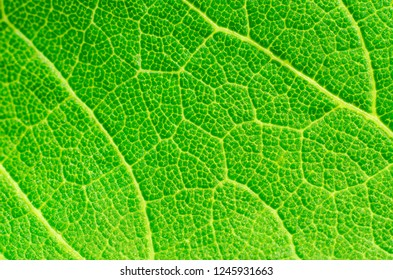 green leaf texture as a background