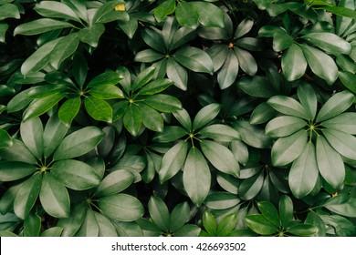 Green leaf texture. Leaf texture background. Hipster toning. Soft focus.