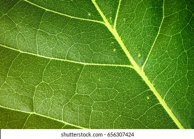 Green leaf texture, copy space for text