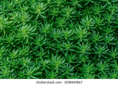 green leaf texture, Fresh tropical Green leaves background