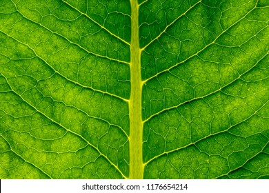 Green leaf texture macro closeup. Abstract green leaf.