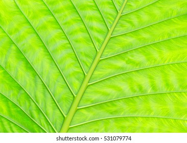 green leaf texture of a plant close up
