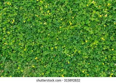 Green leaf texture/leaf texture background