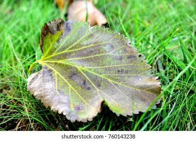 green leaf tissues