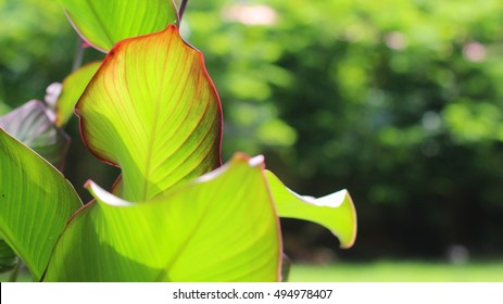 Green leaf, tree in forest background