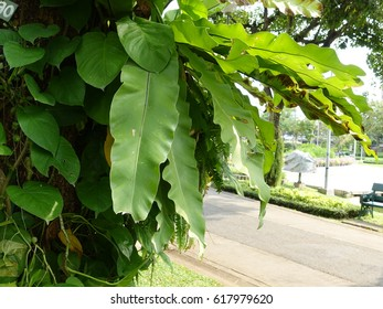Green leaf with tree in garden