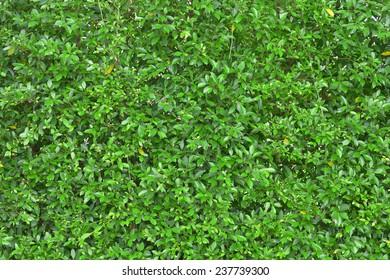 green leaf tree plant wall fence background