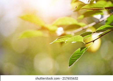 Green leaf under the sunlight. Horizontal photo