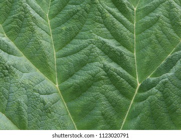 green leaf used as background