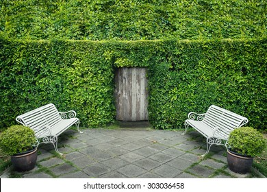 Green leaf wall and door with garden chair