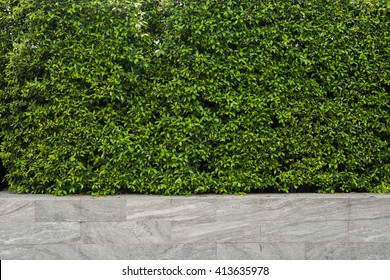 Green leaf wall, plants texture