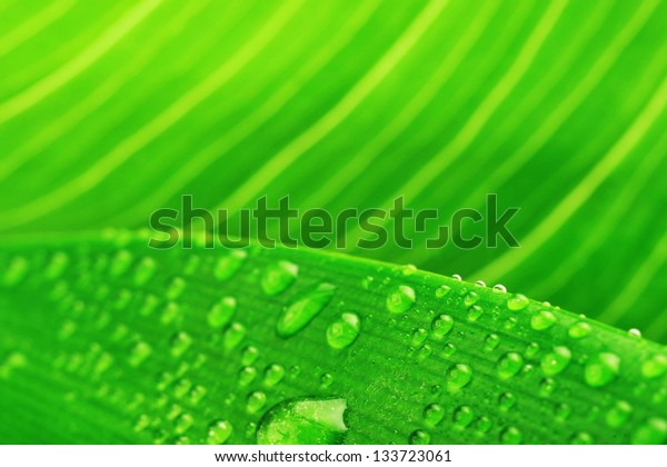 green leaf and water drop close up