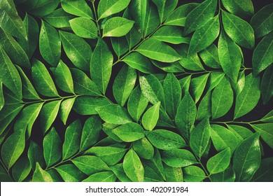 Green leaf with water drop on black background vintage color