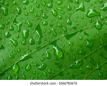 green leaf with water drop texture