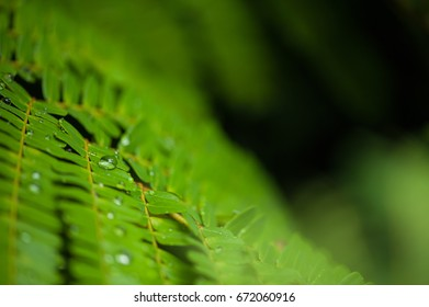Green leaf and water drop texture. Leaf and water texture background.