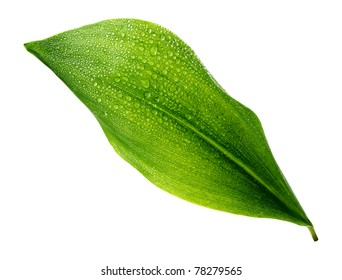 green leaf with water drops