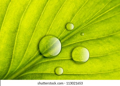 Green leaf with water drops close-up background. Macro
