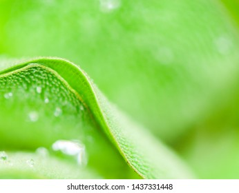 green leaf with water drops,green nature,rainy ,macro water drops