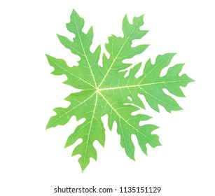 green leaf water papaya and water on leaf isolated on a white background