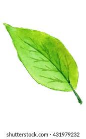 Green leaf in watercolor
