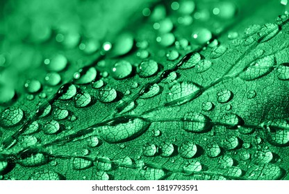 Green leaf with waterdrop on it