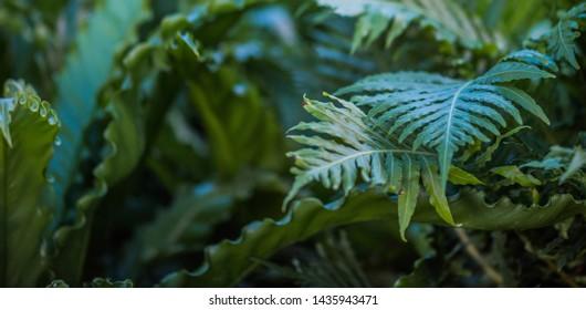 green leafs dark nature background