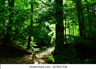 green leafs in the forest