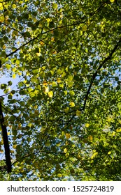 Green leafs on sunny day in autumn