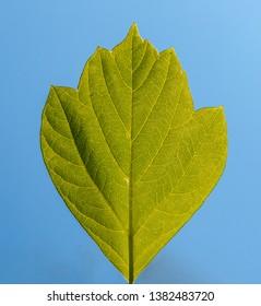 Green leaft on blue background