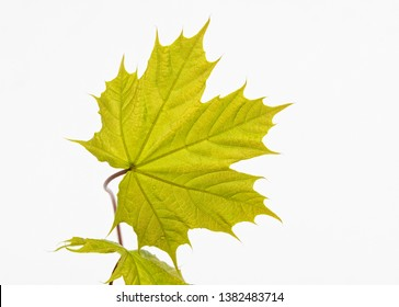 Green leaft on white background