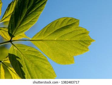 Green leafts on blue background