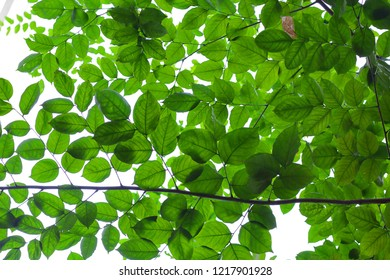 Green leafy background
