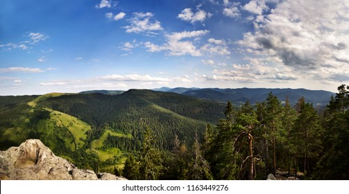 Green leafy forest and valley in mountains of Karpaty, Ukraine