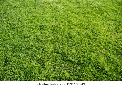 green and leafy grass background