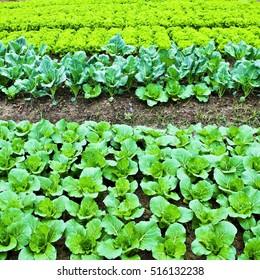 Green leafy vegetables health food.
