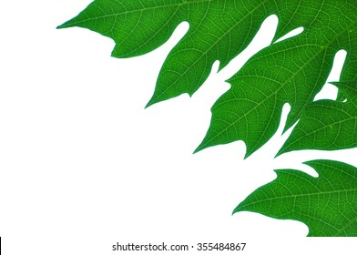 The green leave on white background.