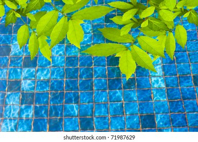 Green leave with Swimming pool background