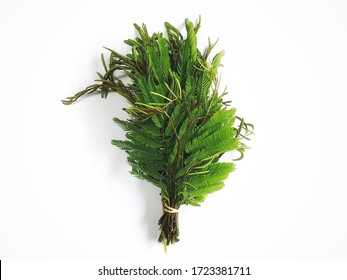 Green leaves of Acacia Concinna have a sour taste. It is an herb and also used as an ingredient in foods that need sour taste.