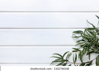 Green leaves of agonis flexuosa on white wooden table, copy space.
