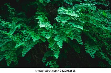 green leaves background, beautiful ferns