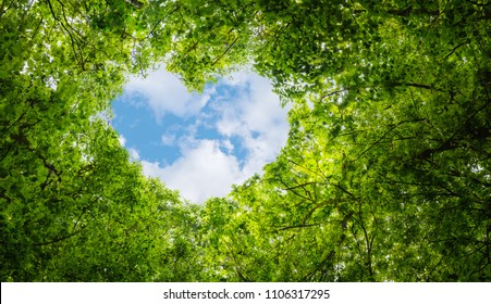 Green leaves background, blue sky and heart shape cloud ecology concept idea eco love symbol background abstract