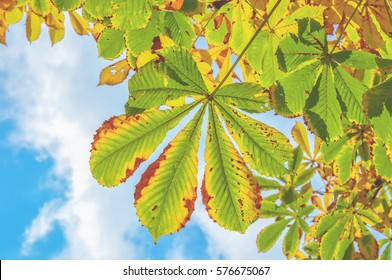 Green Leaves, Background, Nature