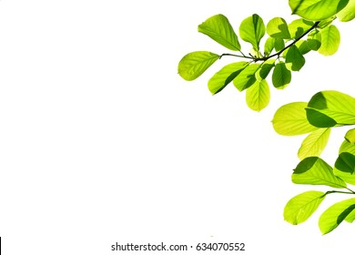 green leaves background, green leaves pattern,  leaves image